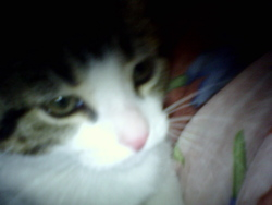 Timine, chat