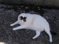 Timinou, chat Gouttière