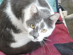 Timmi, chat Gouttière