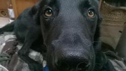 Timmy, chien