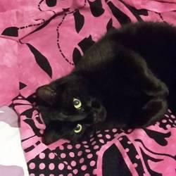 Timmy, chat Gouttière