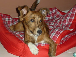 Timon, chien