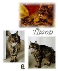 Timon, chat