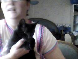 Timon, chat Européen