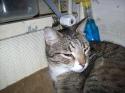 Timon Frère De Pumbaa, chat