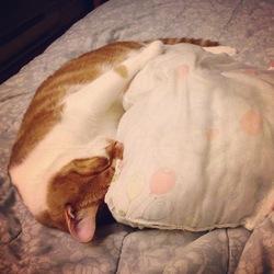 Timothé, chat