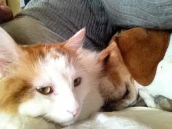 Timothé, chat Gouttière