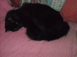 Timothée, chat Gouttière
