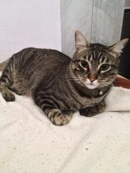 Timy, chat Gouttière