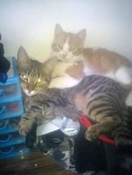 Tina Et Maya, chat Gouttière