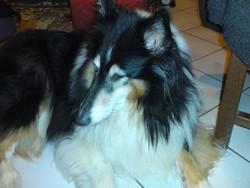Tina, chien