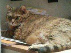 Tina, chat Gouttière