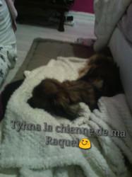 Tina, chien Pékinois