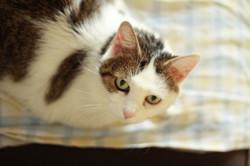 Tina Et Tigrounette, chat Gouttière