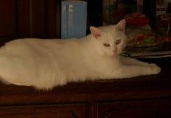 Tincelle, chat Gouttière