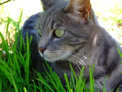 Tinette, chat