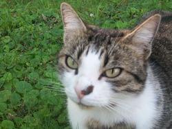 Tinou, chat Gouttière