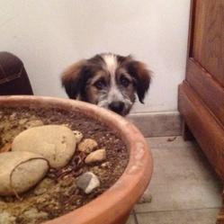Tio Pepe, chien Border Collie