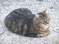 Tipiak, chat Gouttière