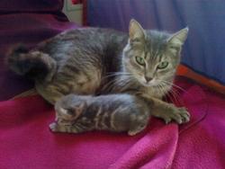 Tirbouchon, chat