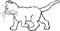 Tire-Bouchon, chat Européen