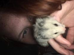 Tison, rongeur Hamster