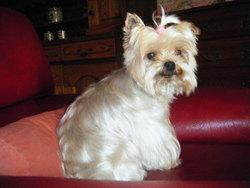 Tissie, chien