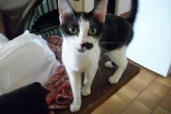 Tite Tache, chat Gouttière