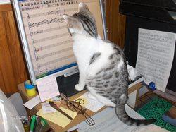 Titi, chat Gouttière