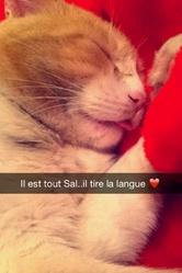 Titi, chat