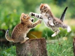 Titi Et Mymy, chat