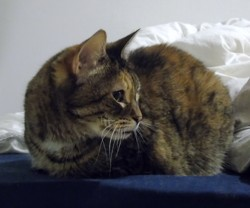 Titich, chat Gouttière