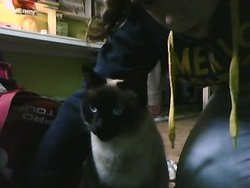 Titine, chat