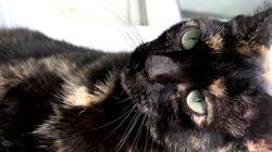 Titine, chat Gouttière