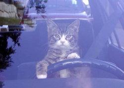 Titolara, chat Gouttière