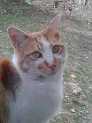 Titou, chat