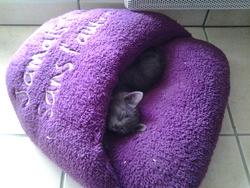 Titou, chat Gouttière