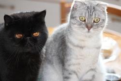 Titou Et Filou, chat