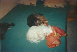 Titou Et Pitchou, chien