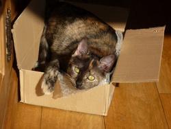Titoune, chat Gouttière