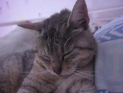 Titounette, chat