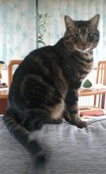 Titeuf, chat Gouttière