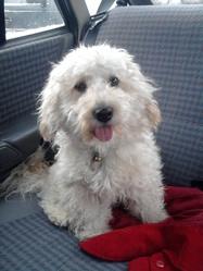 Titus, chien