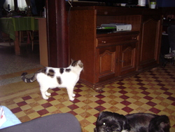 Tobby, chat Gouttière