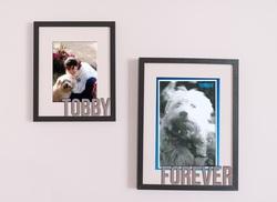 Tobby, chien Barbet