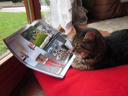 Toboggan, chat Gouttière