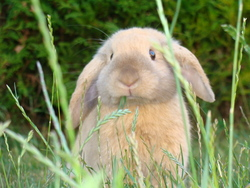 Toby, rongeur Lapin