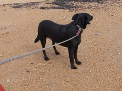 Toby, chien Border Collie