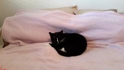 Toby, chat Gouttière