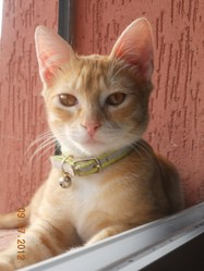 Tom, chat Gouttière